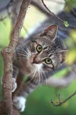 neutering cat